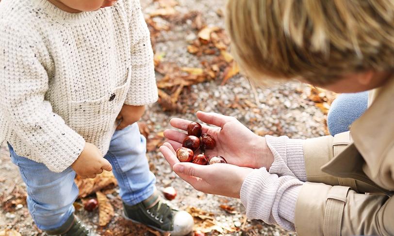 Castañas, un clásico del otoño para levantar el ánimo