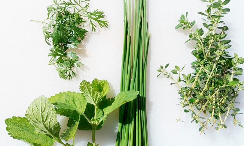 Hierbas aromáticas: un toque especial para tus recetas